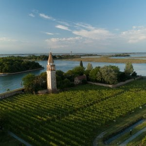 Un'immagine di Venissa, nella laguna di Venezia