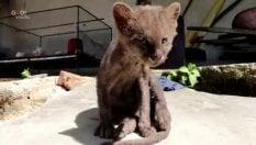 """Adotta un gattino abbandonato e scopre che è un """"piccolo puma"""""""