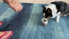 Giù le mani dal gelato: il cane difende la coppetta dal padrone
