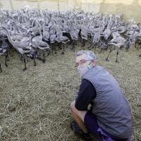 Camargue, i baby fenicotteri dalle piume grigie