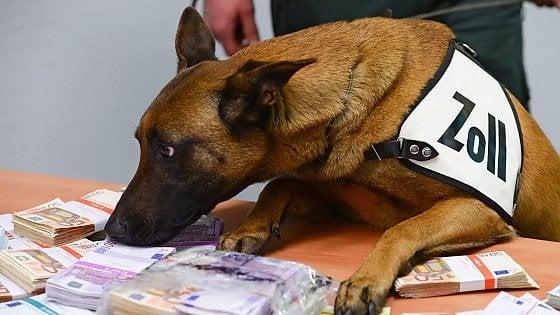 Francoforte, l'impresa di Aki: all'aeroporto il cane della dogana annusa e scova 250 mila euro nelle borse dei turisti