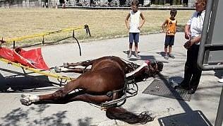 """Reggia di Caserta, muore un cavallo. Europa Verde denuncia: """"Ucciso da caldo e fatica"""""""