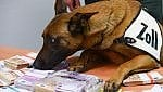 L'impresa di Aki: all'aeroporto cane poliziotto fiuta 250mila euro