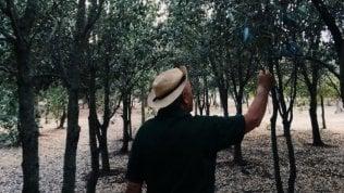 Il padre e il figlio che piantano gli alberi per salvare il Salento
