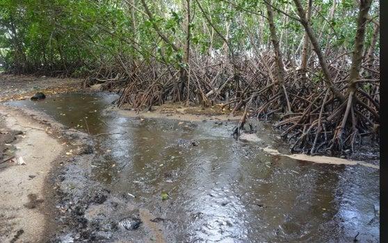 Il dramma di Mauritius: 20 anni per eliminare il carburante dalle acque