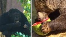Frutta e ghiaccioli al Bioparco: così gli animali combattono il caldo