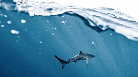 """Australia, surfista tramortisce a pugni lo squalo e salva la moglie: """"Ho fatto quello che avrebbe fatto chiunque"""""""