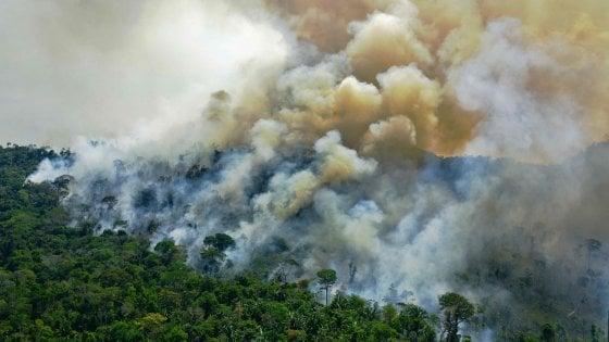 120038591 c05b5202 de48 4e4d bd0a 501b81bdfe21 - Amazzonia, 2020 anno nero: devastati 8.500 chilometri quadrati di foreste
