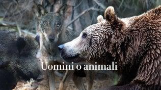 Inchiesta sulla battaglia contro orsi, lupi e cinghiali che divide gli italiani Podcast