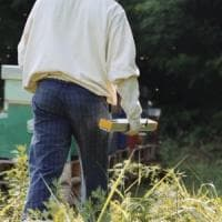 Clima e pesticidi: meno nettare nei fiori e api senza cibo