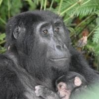 """Il """"catastrofico declino"""" della fauna selvatica: in 50 anni persi due terzi della..."""