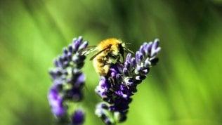 Bentornate api selvatiche