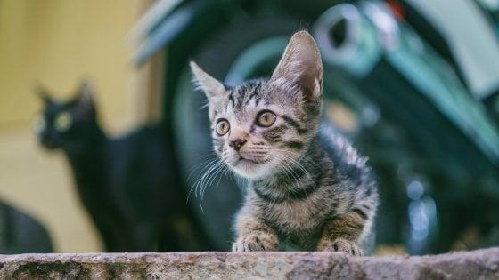123038545 b4150662 7324 4473 9342 9632c01bb3b8 - Covid, tutti pazzi per cani e gatti: nel Regno Unito 3,2 milioni di pets venduti in un anno