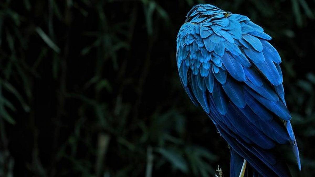 Ecco perché i colori più intensi del mondo naturale sono blu e verde
