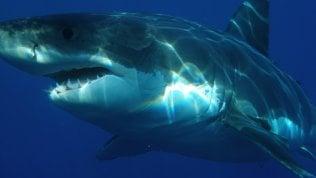 Effetto Terra Chantelle Doyle e l'incontro con lo squalo