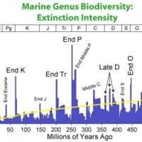 Scoperta l'estinzione di massa che ha plasmato il mondo così com'è ora