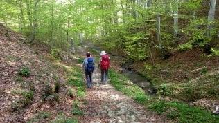 L'agenda dei cammini La storia, l'arte e la natura da ammirare in compagnia