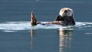 Riccio batte lontra (e perdeanche il reef) Lo speciale