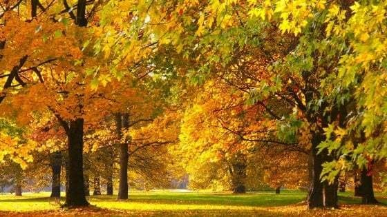 Equinozio d'autunno, ecco perché nel 2020 è il 22 settembre