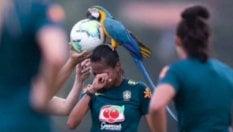 Calcio, partita interrotta: c'è un pappagallo sulla testa di una giocatrice
