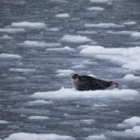 Artico, ghiaccio marino ai minimi: il secondo dato più basso di sempre