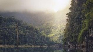 """""""Dall'Africa al Messico così contrastiamo la deforestazione"""""""