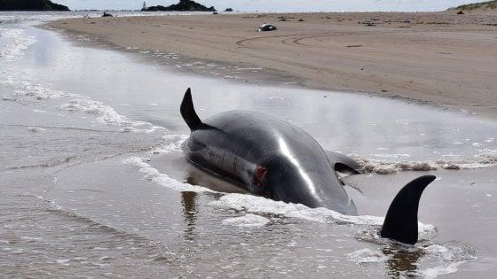 115459288 df7d6cce 2ef5 4c3d 8969 4c6a97004a5b - Oceano Indiano, un canto unico aiuta a identificare un branco di balenottere azzurre finora sconosciute