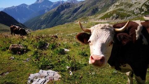 Difendere latte e formaggi puntando sulla tecnologia: il progetto Typicalp