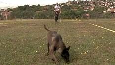 L'addestrameno dei cani antimine: ecco cosa fanno quando le trovano