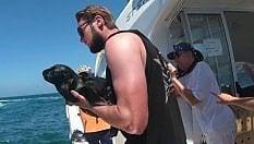Rimettono il cucciolo di foca in mare, ma la sua reazione stupisce tutti