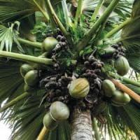 Migliaia di piante commestibili ci aiuteranno a sopravvivere al caldo