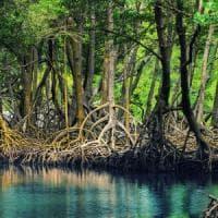 Brasile, giudice contro Bolsonaro: stop alla revoca della protezione per le mangrovie...