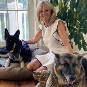 173139866 f2fbdb71 3c70 4fab b6c6 38bf874656df - Covid, tutti pazzi per cani e gatti: nel Regno Unito 3,2 milioni di pets venduti in un anno