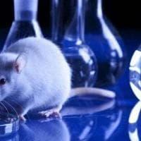 """La Crui sulla sperimentazione animale: """"Ostacolarla significa danneggiare tutta la ricerca..."""