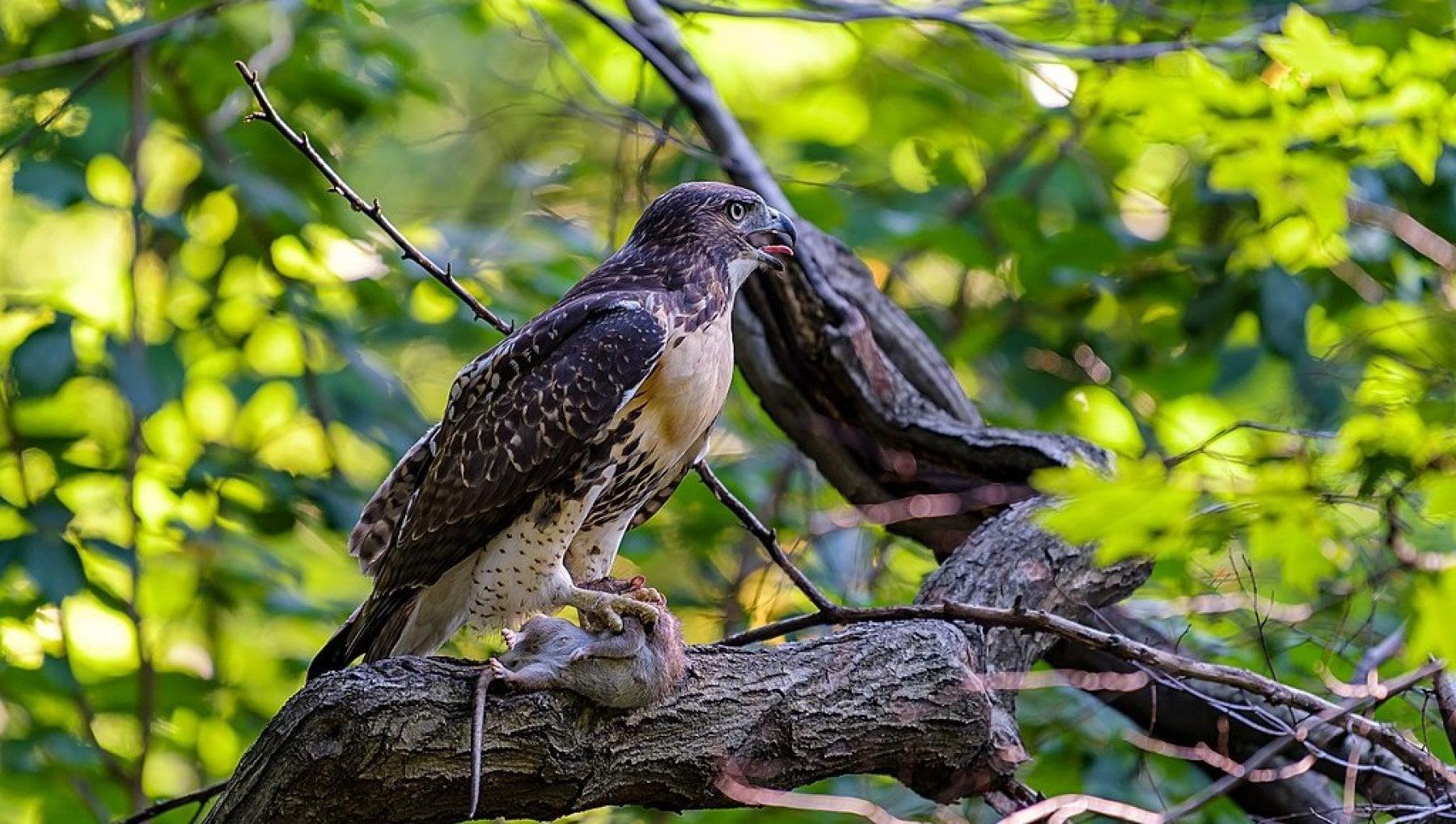 """175013463 5dc2b14f 8a14 4e46 a2f4 7133ecce30e0 - """"Birding Bob"""", il biologo che guida i newyorkesi alla scoperta delle 250 specie di uccelli di Central Park"""