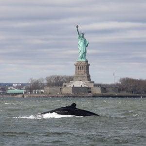 201051215 0f097e6e 225c 4d71 8435 8bdae465d70b - Oceano Indiano, un canto unico aiuta a identificare un branco di balenottere azzurre finora sconosciute