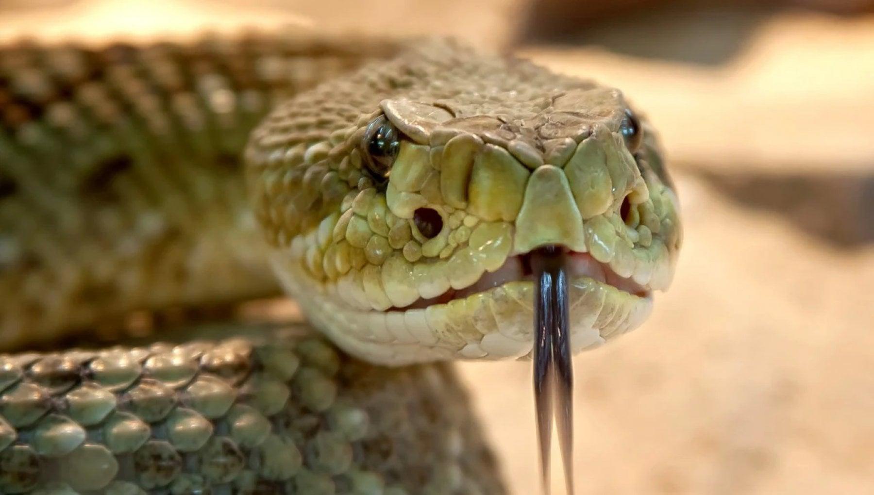 141535374 11e55517 44f7 4a51 95cb 35fc4cb1bdff - Repubblica ceca, bimba di 8 anni morsa da un serpente a sonagli in giardino