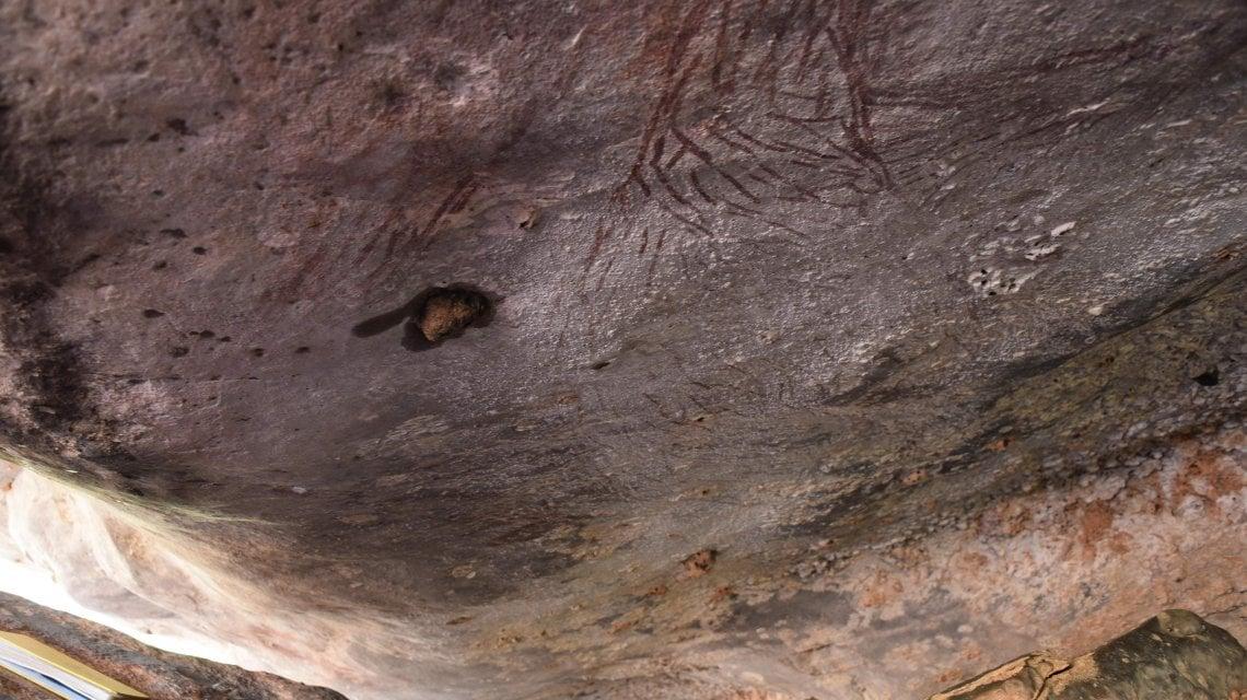 Un canguro vecchio di 17 mila anni