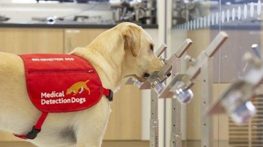 I cani diagnosticano il Covid: primo test in Italia al Campus Biomedico di Roma