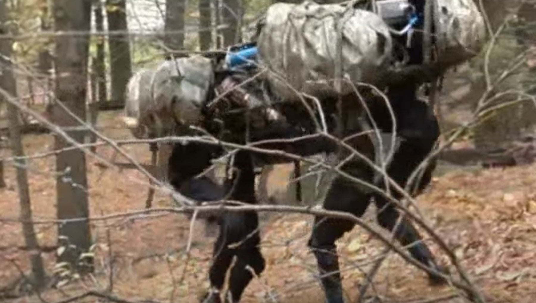 205711763 b770bc07 4e31 4145 bb49 91cdd18bb60c - Forze Armate, dopo quasi 20 anni tornano i muli: in versione robot o in carne e ossa