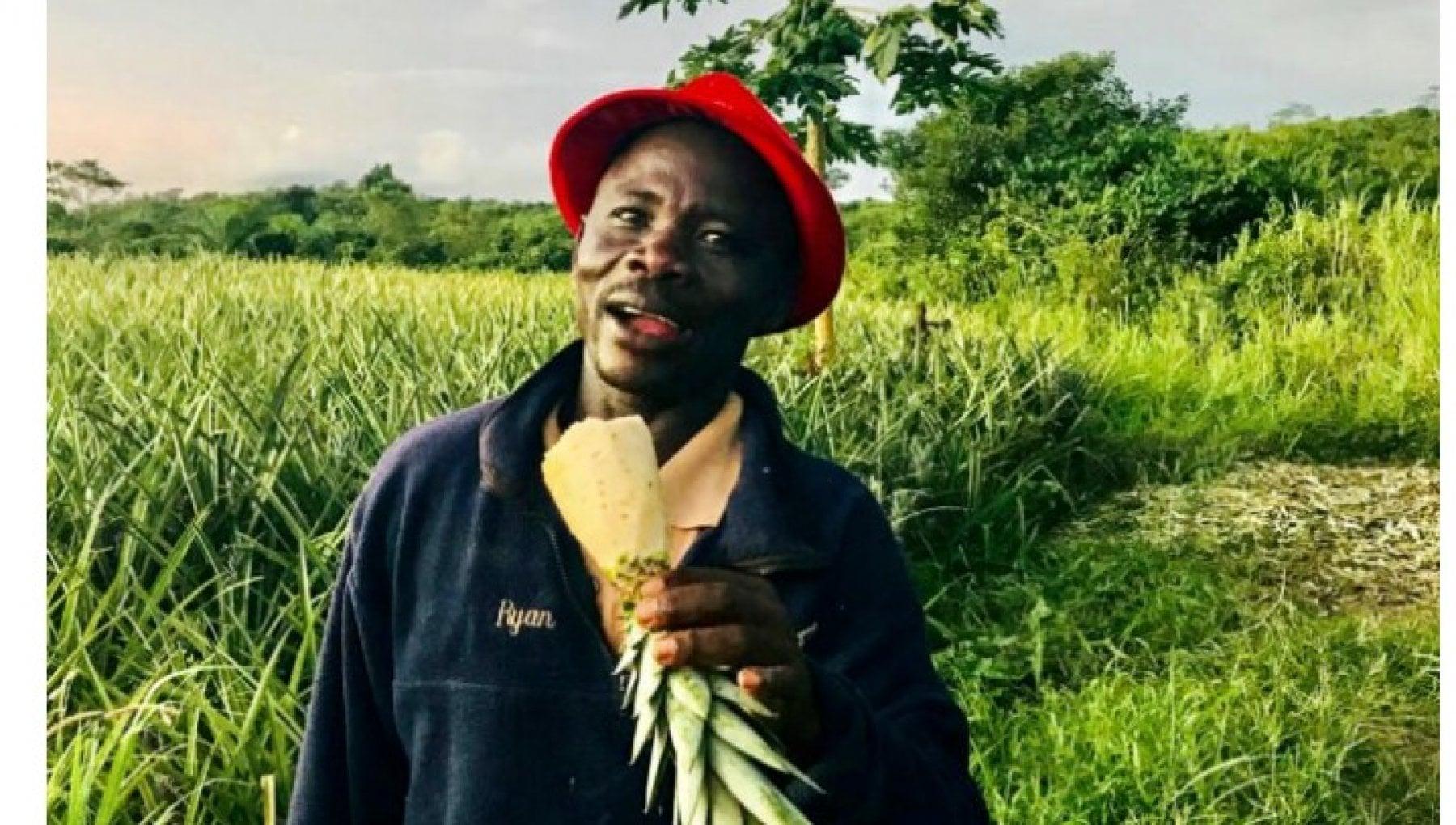 200854873 647ba867 337c 4a4f b40b 1713050167af - Testimonial dell'ananas a sua insaputa: contadino del Ghana vince la battaglia contro i supermercati olandesi
