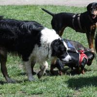 Animali, decreto Speranza per somministrare farmaci umani a scopo veterinario. Lav:...