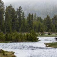 Guida del Montana sbranata da un orso grizzly nel parco Yellowstone