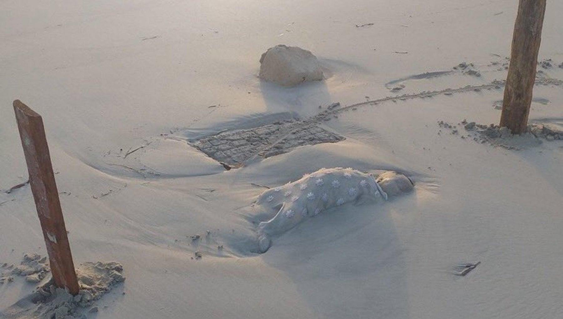 """161211921 02b41772 0643 4580 a10e 66f4c5442602 - Migranti, senza nome i bimbi trovati morti sulla spiaggia di Zuwara. L'Oim: """"Temiamo un naufragio di cui non siamo a conoscenza"""""""
