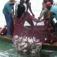 """Greenpeace: """"Le aziende europee che producono farina di pesce affamano l'Africa ..."""