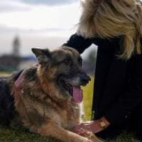 """Usa, Biden annuncia la morte dell'amato cane Champ: """"Ci mancherà"""""""