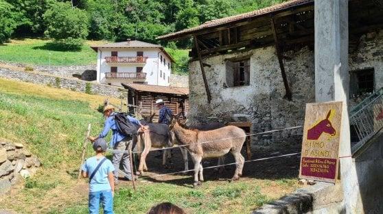 Asini, cavalli, erbe curative e turismo. La Pink economy scopre la montagna