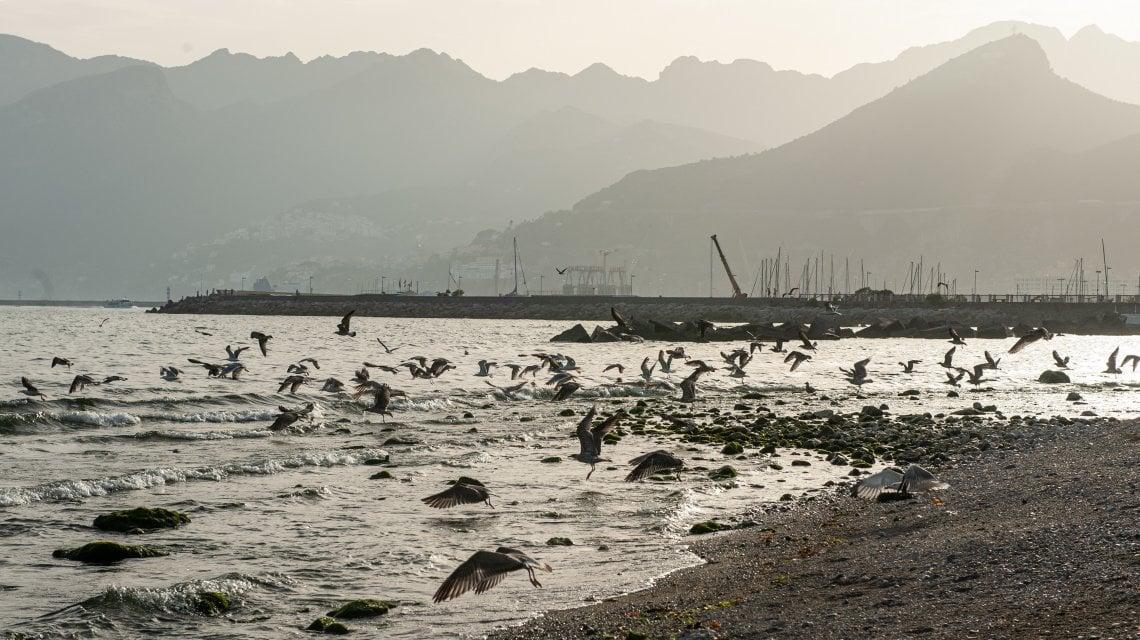 200948380 f2f1e5cf 6857 44af 8e1d 06e730188f54 - Cercando l'estate sulle orme di Pasolini, la prima tappa è Salerno