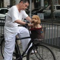La Cina conquistata dagli animali domestici: milioni di cani e gatti viziati come figli....