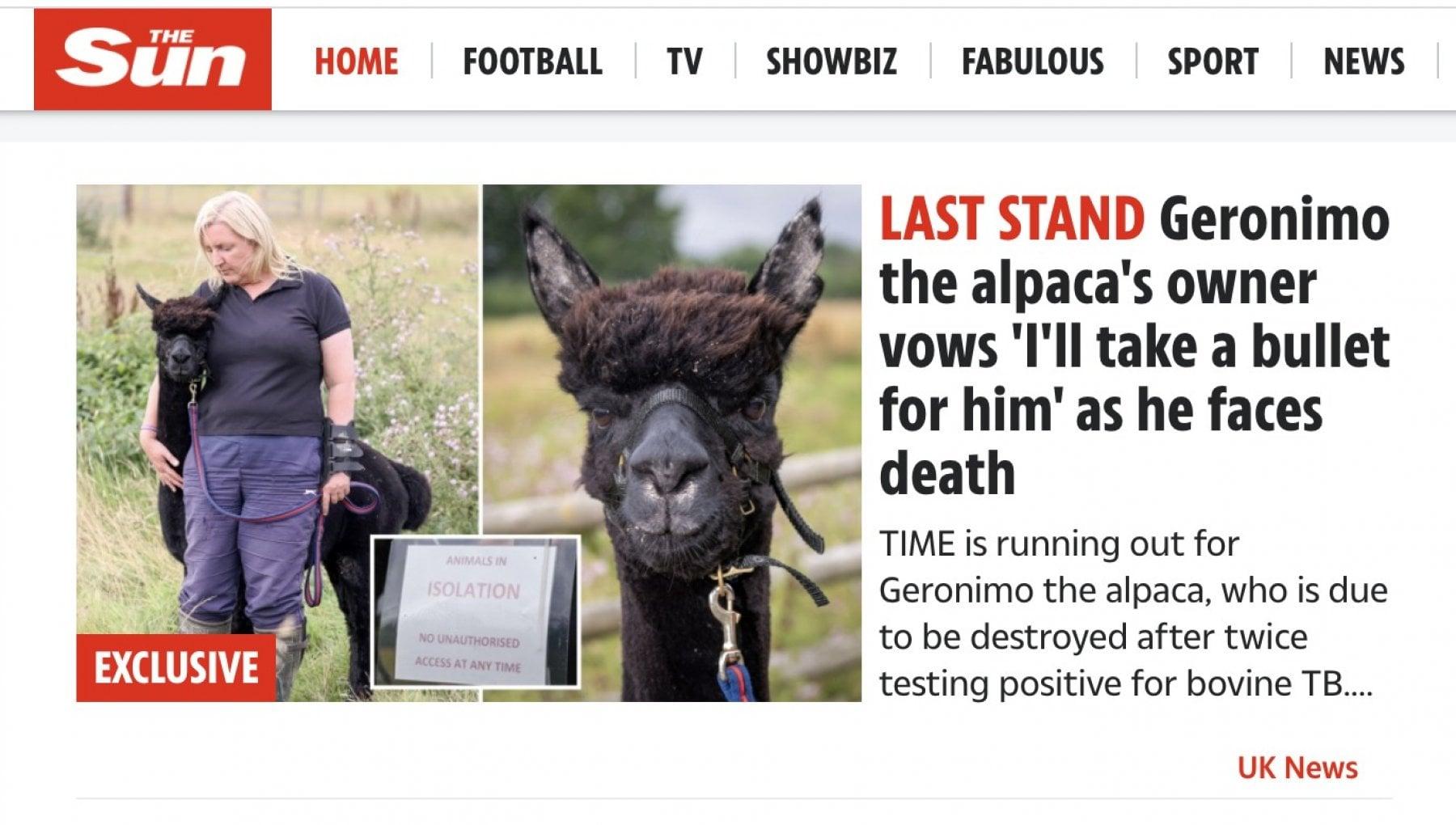 """104659975 72ef78b5 b5e7 4a47 b4de 25ebb82e7f73 - """"Salvate il mio Geronimo"""". Il caso dell'alpaca condannato a morte in Inghilterra"""